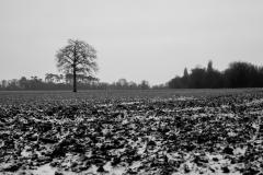 le champ gelé